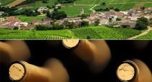 terroire-de-bourgogne